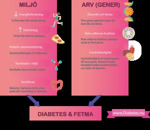 Denna figuren illustrerar vad som orsakar typ 2 diabetes. Sambandet mellan diabetes och fetma är mycket starkat. Personer med fetma har inte sällan diabetes eller förstadier till diabetes. Fetma och diabetes har många gemensamma orsaker, som kan delas upp i arv och miljö.