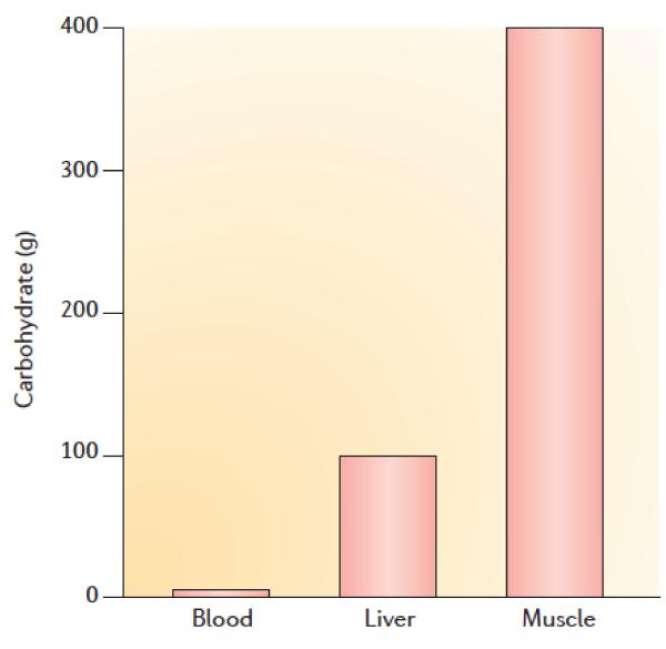 En schematisk bild som visar fördelning av kolhydrater i kroppen. Kolhydraterna är fördelade mellan 400g glykogen i muskel, 100g glykogen i levern och 3g glukos i blodcirkulationen. De glykogen som finns i muskeln är däremot inte tillgängligt för kroppens metabolism. Källa: Godfrey R et al. Skeletal muscle disorders of glycogenolysis and glycolysis. Nature reviews.